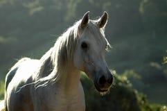 Pferd am Sonnenuntergang lizenzfreie stockbilder