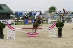 Pferd springen Stockfotos