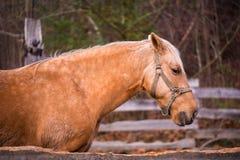 Pferd an Ställen 3 Lizenzfreies Stockbild