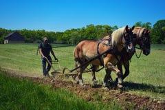 Pferd Team Plowing stockbild