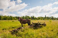 Pferd, traditioneller ukrainischer Wagen auf einem Feld Stockfotografie