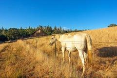 Pferd u. Scheune lizenzfreies stockfoto
