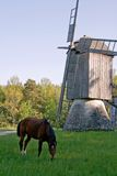 Pferd und alte Windmühle Stockbild