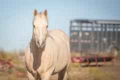 Pferd und Anhänger Stockfotografie
