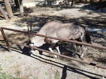 Pferd und Antilope in Safari Park lizenzfreie stockfotografie