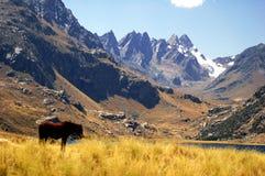 Pferd und Berg stockfotos