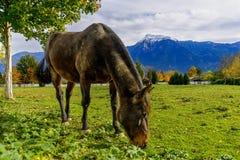 Pferd und Berg im Britisch-Columbia, Kanada Lizenzfreies Stockbild