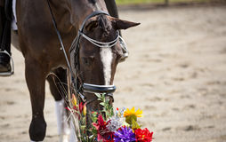 Pferd und Blumen Stockfotografie
