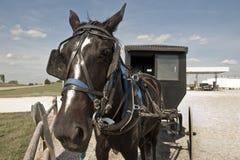 Pferd und Buggy stockfoto