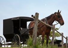 Pferd und Buggy Lizenzfreies Stockbild