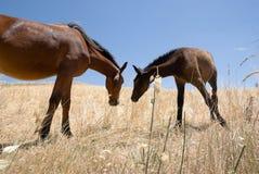 Pferd und Colt Lizenzfreies Stockbild