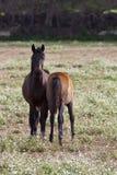 Pferd und Colt Lizenzfreie Stockbilder
