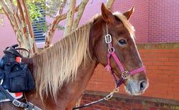 Pferd und Cowboy an der Bibliothek lizenzfreie stockfotos