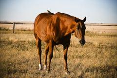 Pferd und der Vogel Lizenzfreies Stockfoto