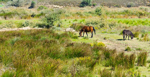 Pferd und Esel Stockfotografie