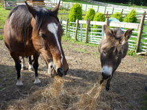 Pferd und Esel Lizenzfreies Stockbild