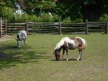 Pferd und Esel Stockbild