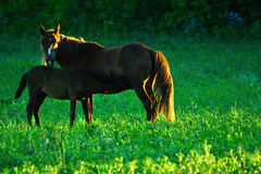 Pferd und Fohlen Stockbilder