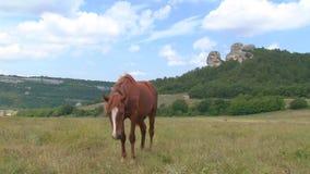 Pferd und Fohlen in der Weide stock video footage