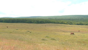 Pferd und Fohlen in der Weide stock video