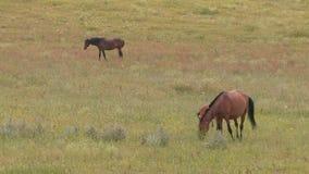 Pferd und Fohlen in der Weide stock footage