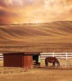Pferd und gepflogen über Land lizenzfreies stockbild