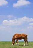 Pferd und Grasland Stockfotos