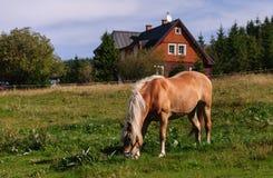 Pferd und Haus Stockfotos