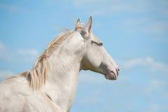 Pferd und Himmel Lizenzfreie Stockbilder