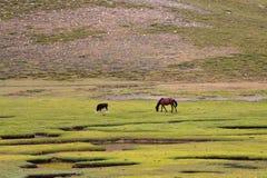 Pferd und Kalb auf dem Feld Lizenzfreies Stockbild