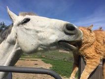 Pferd und Katze, die jedes pflegen stockbilder