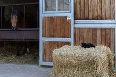 Pferd und Katze am Gestüt am Frühlingsmonat können in Süd-Deutschland Lizenzfreies Stockbild