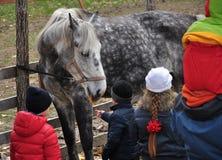 Pferd und Kinder Lizenzfreie Stockfotos