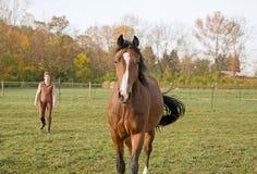 Pferd und Kursleiter stockfotografie