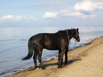 Pferd und Meer. Stockfotos