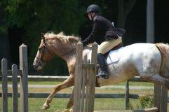 Pferd und Mitfahrer Lizenzfreies Stockbild