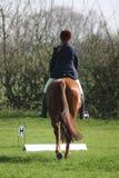 Pferd und Mitfahrer von hinten Lizenzfreies Stockfoto