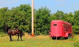 Pferd und Pferdeanhänger Lizenzfreie Stockbilder