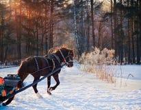 Pferd und Pferdeschlitten Lizenzfreie Stockfotos