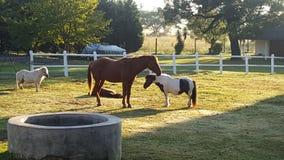Pferd und Pony stockfotografie