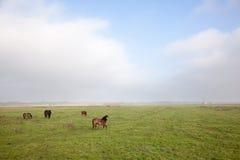 Pferd und Ponys im niederländischen Polder Lizenzfreies Stockbild