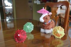 Pferd und Regenschirme Stockfotos