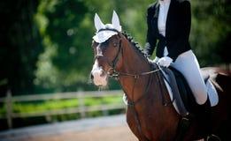 Pferd und Reiter Stockfotografie