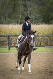 Pferd und Reiter, die langsam galoppieren Lizenzfreies Stockfoto
