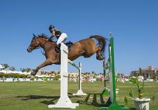 Pferd und Reiter, die in Reiterwettbewerb springen stockbilder