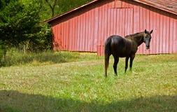 Pferd und roter Stall Lizenzfreies Stockfoto