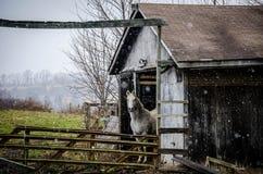 Pferd und Scheune Stockfotos