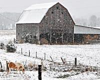 Pferd und Scheune in den starken Schneefällen Lizenzfreies Stockfoto
