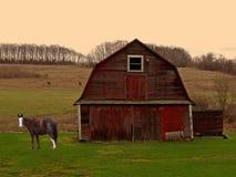 Pferd und Stall am Sonnenaufgang Lizenzfreies Stockfoto
