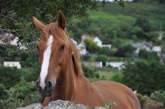 Pferd und Steinwand Dublin Irland Stockfotos